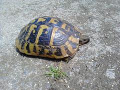 Korfiotische Straßenblockade oder meine Fortbewegungsgeschwindigkeit der letzten Tage: Schildkrötenhaft!