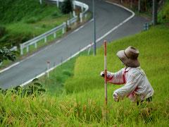 千枚田の中をはしる県道32。かかしがお出迎え