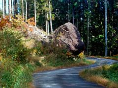 登山道は狭いし、見通しが悪いので注意
