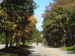 ちなみに紅葉の見頃は10月下旬から11月上旬