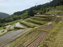 これから秋まで美しい風景が見られる棚田