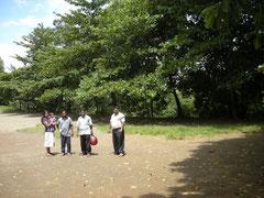 大きく育ったコッタンバの木(1998年植林)