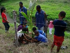 力を合わせて木を植える子どもたち(フィジー)