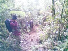 森の中で散策しながら植物観察