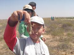 砂漠のトカゲ、捕まえた!
