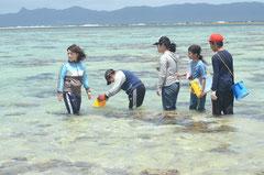 エメラルドグリーンの中、シャコ貝を探す川平小中の児童ら=オジーの浜、川平。