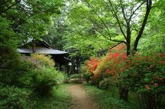 太子堂への春の山道