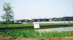 姥ヶ池。近年の耕地整理により、もとの場所から移動しました。写真左に立っているのは柳の木です。