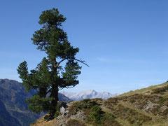 Inntaler Höhenweg - Lizum im Wattental