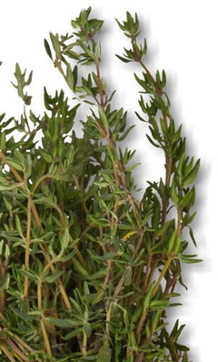 Thyme leaves