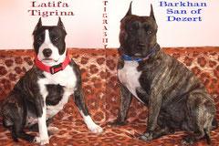 BARKHAN  & LATIFA