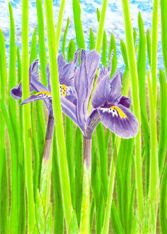 "Acrylic painting of blue iris with clouds - ""Iris"""