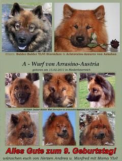 A-Wurf von Arrasino-Austria, geb. 15.01.2011