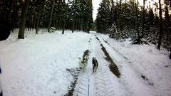 Geräumte Waldwege