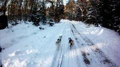 Der Trail als Flickenteppich