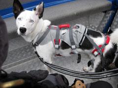 Toback mit dem DoubleBack™ Harness; Foto: Fuchs