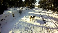 Sonne - Kälte - Schnee - eigentlich Ideal