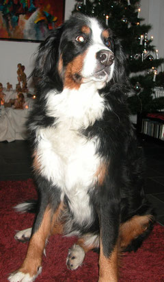 Tosca 9 1/2 jährig