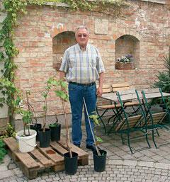 Hans Moser sen. bei der Aufzucht der Rebe
