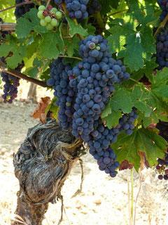 Vignoble et vin AOC Béarn (Vic-Bilh)