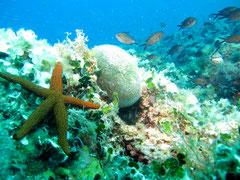 first dive villefranche sur mer