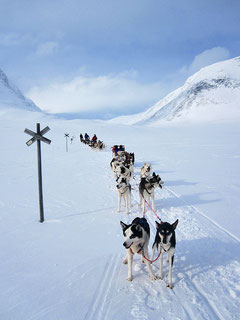 mit dem Hundegespann im Gebirge