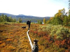 Gebirgswanderung  im Nationalpark/Lappland