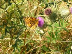 Rhön Schmetterling
