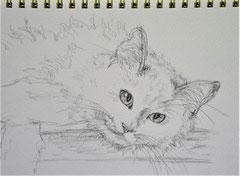 Cat(Pencil drawing)