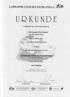 Ergebnisurkunde des Schnupperworkingtests der LCD Regionalgruppe Rhein-Main