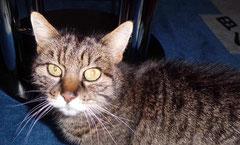 Katze Susi will neues Zuhause