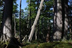 Experience Wilderness Tour Nationalpark Kalkalpen