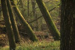 """Wienerwald Wildnis I"" - Halbtagestour"