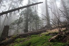 Experience Wilderness Tour Ostkarpaten