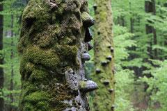 Experience Wilderness Tour Risnjak Nationalpark