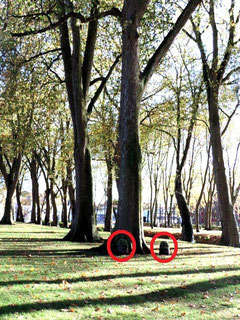 Au parc de la Hotoie à Amiens- Ph: Magali