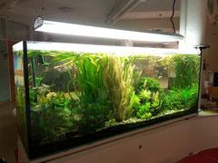Aquarium Klinikum Konstanz