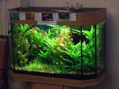 Aquarium Pflegeheim, ChrisTina Konstanz