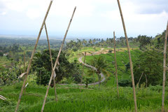 Panorama view of the rice paddies in Tergen