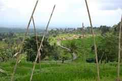 Mitten in den Reisfeldern von Tergen