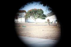 弾痕を覗くと赤い花をつけた木が見えた 撮影・山野孝之
