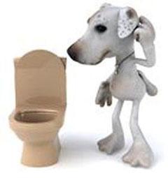 Приучение к туалету