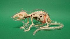 ネズミ(鼠):遺跡出土別獣骨種別獣骨