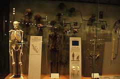 「福井県立恐竜博物館」常設展示