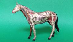 ウマ(馬):遺跡出土動物種別獣骨