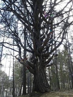 Хатасское дерево - орук мас