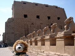 Ägypten Mini-Leo