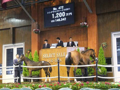 競走馬の「セリ」、セレクトセールの模様
