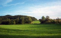 Schorndorf im Landkreis Cham