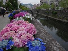 ☆長崎の名所「眼鏡橋」と紫陽花。